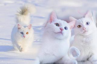 Van Katt